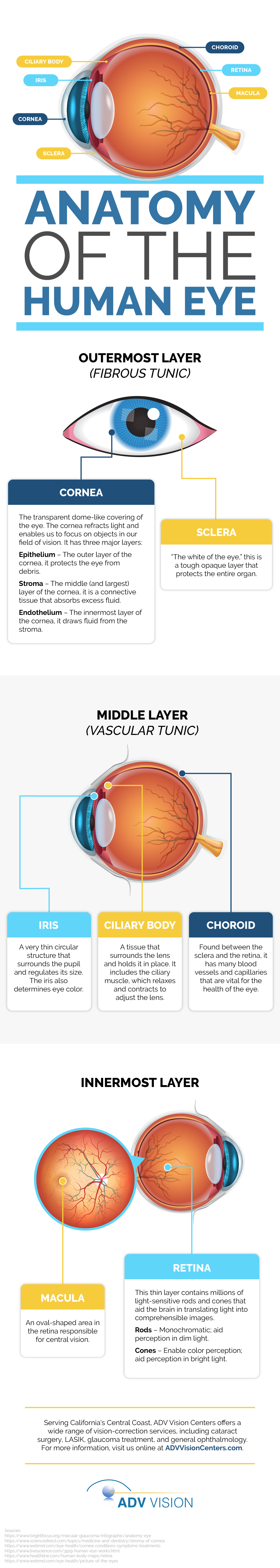 Anatomy of the Human Eye Infographic